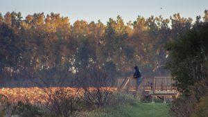 Wyandot Wetland & Barnes Addition