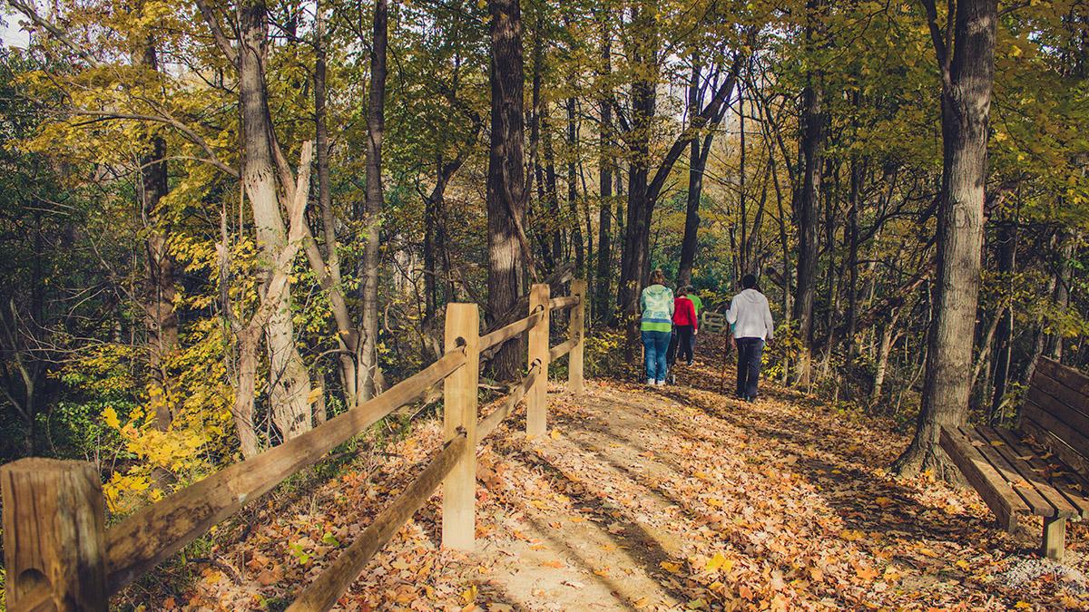Hoffman Forest Metropark