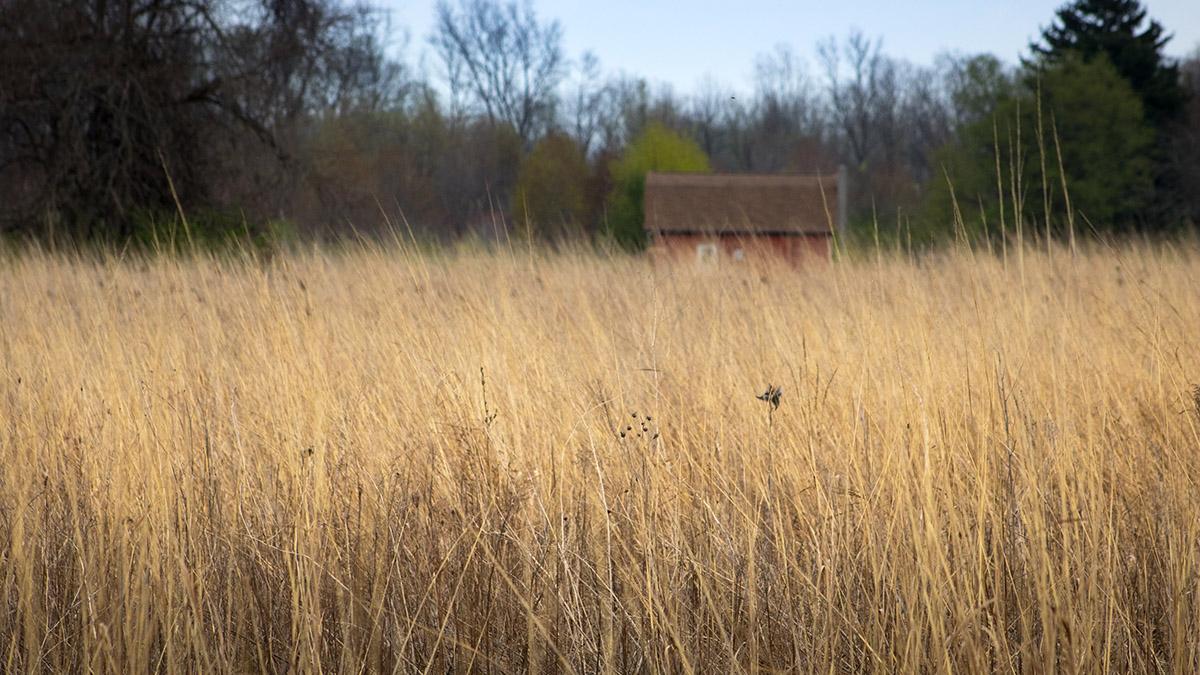 Steinen Wildlife Area