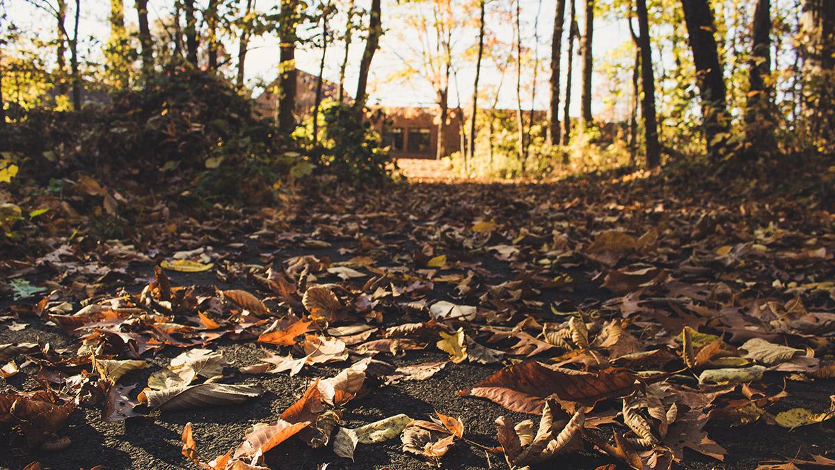 Osborn MetroPark Northwoods Trail