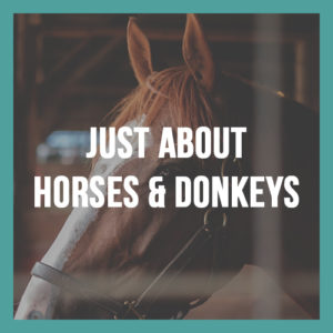 Just About Horses and Donkeys Program Image