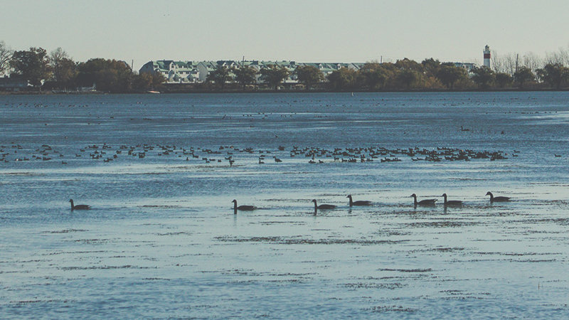 Winter Waterfowl Walk