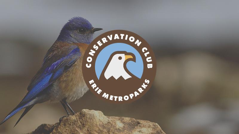 Conservation Club | Blue Bird Boxes